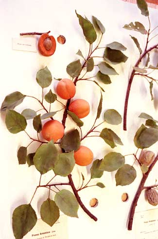 Photo of glass apricot branch