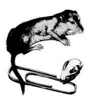 Model of mammal