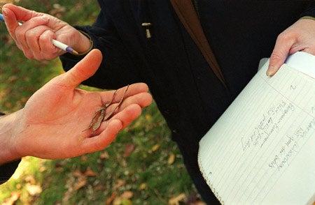 Students study tree sample