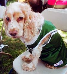 Angus Bernard, dog