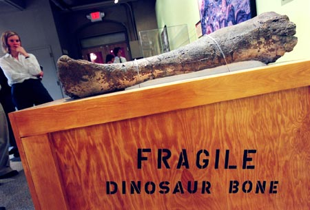 Leg bone of a dinosaur