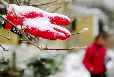 Photo of snow glove in tree branches