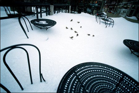 Au Bon Pain tables in the snow