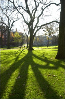 Yard, tree