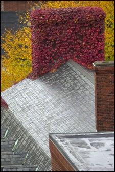 foliage-covered chimney