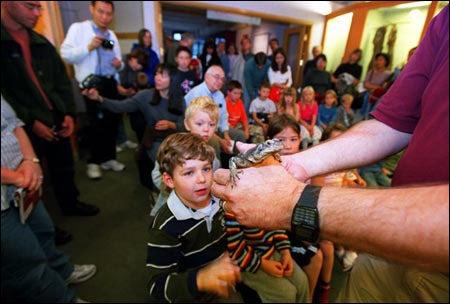 Chuckwalla lizard and fascinated kids