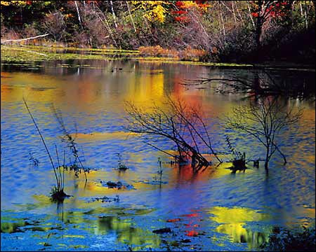 Autumn colors reflected in pond