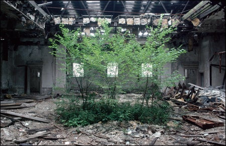 New Jersey library reading room, overgrown