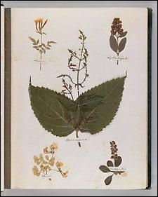 leaf page