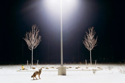 "In Stein's photos, taken in the small Pennsylvania town of Matamoras and on display in a new exhibit at the Harvard Museum of Natural History, nature comes right up to the door ... or parking lot, as in the photograph titled ""Howl."""