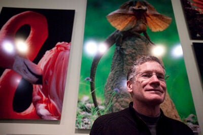 (Cambridge, MA - January 27, 2010) - Jonathan Losos, Monique and Philip Lehner Professor for the Study of Latin America and Curator in Herpetology visits the Language of Color exhibition at the Harvard Museum of Natural History at Harvard University. Behind him is Jean-Paul Ferrero's photograph of a Frilled Lizard (center). Staff Photo Kris Snibbe/Harvard News Office