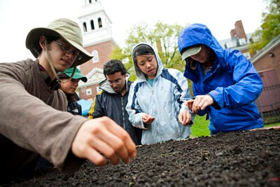 "Josh Wortzel '13, Susan DeWolf '10, Prateek Kumar '11, Tina Liu '11, and Patricia Levi '12 plant seeds and bulbs in the Harvard Community Garden. The plot in front of Lowell House — 560 square feet of growing space — is a lesson in local food and sustainability that matches the University's environmental ethic, said Zachary Arnold '10. ""Our tagline is: a beautiful and productive space."""