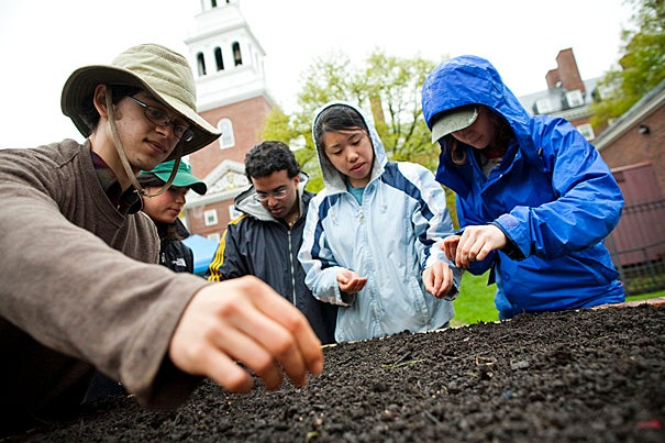 """Josh Wortzel '13, Susan DeWolf '10, Prateek Kumar '11, Tina Liu '11, and Patricia Levi '12 plant seeds and bulbs in the Harvard Community Garden. The plot in front of Lowell House — 560 square feet of growing space — is a lesson in local food and sustainability that matches the University's environmental ethic, said Zachary Arnold '10. """"Our tagline is: a beautiful and productive space."""""""