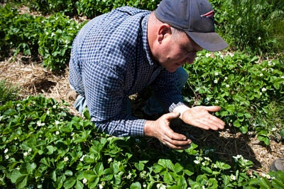 Fresh and local produce from Ward's Berry Farm contributes to the meals served at Harvard. Jim Ward (pictured) runs the farm in Sharon, Mass.