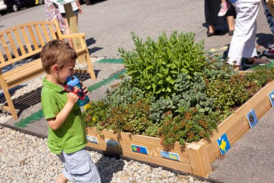 A youngster checks out the diverse greenery in a new Everett Street planter.