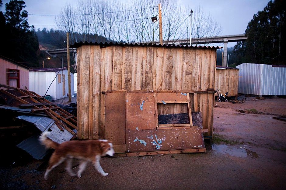 A stray dog roams in Campamento Ebenezer. Stephanie Mitchell/Harvard Staff Photographer
