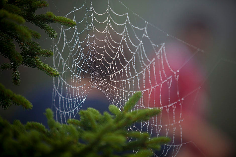 At the summit, an intricate spider web glistens.  Justin Ide/Harvard Staff Photographer