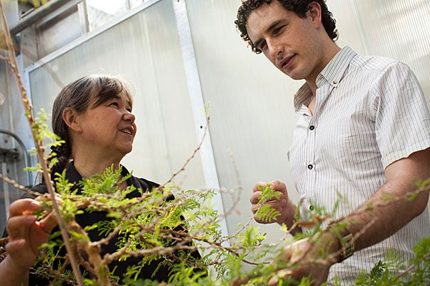 Harvard biologist Naomi Pierce and economist Glen Weyl (a junior fellow in Harvard's Society of Fellows) are co-authors on a new paper applying economic contract theory to mutualism, where individuals from two different species help one another. Naomi Pierce (from left) and Glen Weyl are pictured in the greenhouses above the Museum of Comparative Zoology Laboratories. Stephanie Mitchell/Harvard Staff Photographer