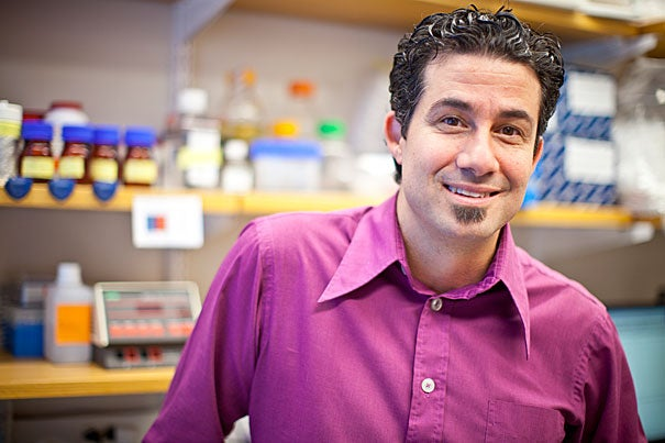 Derrick Rossi's group used synthetic mRNA to reprogram adult human skin cells, called fibroblasts, turning them into cells that are apparently identical to human embryonic stem cells, the initial building blocks of the body's organs.