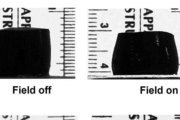 """Called a """"magnetic sponge,"""" a novel macroporous ferrogel is shown being compressed by an applied magnetic field. The reversible compression quickly forces out the drugs, cells, or proteins embedded in the ferrogel."""
