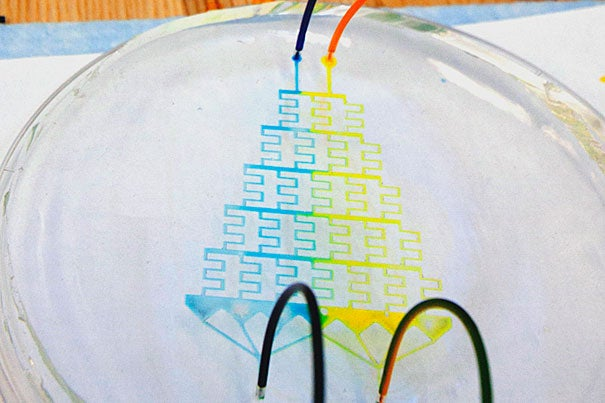 To demonstrate this concentration gradient generator, created in the lab at SEAS, two dyes are injected at the top, and they travel through a maze of tiny channels. The configuration of the channels, the flow rate of the dyes, and the material properties of the chip all affect the amount of mixing that can take place. At the end of the maze, a predictable concentration gradient is produced.