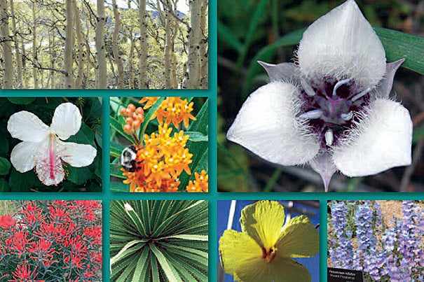 "According to the North American Collections Assessment report, only 39 percent of the nearly 10,000 North American plant species threatened with extinction are being maintained in collections. ""This report is a wonderful illustration of the Arboretum's critical role in shaping the national and international agenda for the preservation of rare and endangered biodiversity,"" said William ""Ned"" Friedman, director of the Arnold Arboretum and Arnold Professor of Organismic and Evolutionary Biology."