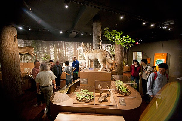 """I grew up here, I love the forests, and walking through the woods,"" said Paul Zofnass, a Harvard alumnus whose $500,000 gift made the exhibit possible. ""What we're trying to do is not just show all the species and how different they are, but also how they're related to each other."""