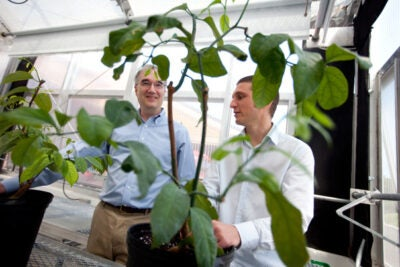 William Friedman (left) and Julien Bachelier have shown that females in an ancient lineage of woody vines duke it out for reproductive rights, employing a practice that may give researchers a glance back in time at a strategy that helped to foster today's diversity.