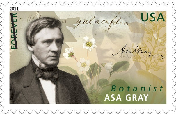 Asa Gray spent a long and fruitful career at Harvard, describing many new species of plants and amassing collections that are housed today in the Harvard Herbaria. The Asa Gray stamp was unveiled at the Harvard Museum of Natural History.