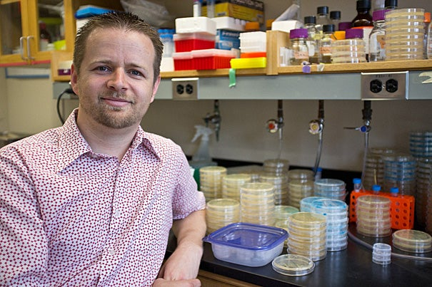 Christopher Marx, associate professor in the Department of Organismic and Evolutionary Biology, has found that rather than increase over time, the value of beneficial mutations in a cell decreases.