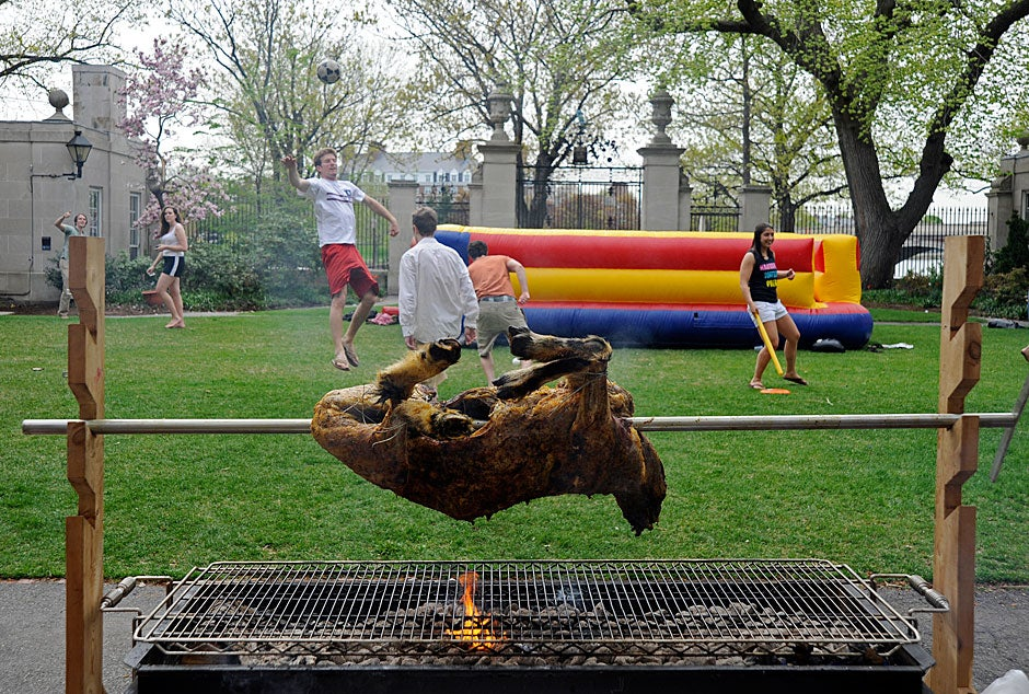 A goat is suspended over coals as students play Frisbee and soccer in the Dunster courtyard at the annual goat roast. Jon Chase/Harvard Staff Photographer
