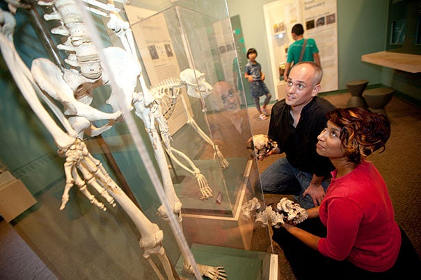 "Harvard researchers Zarin Machanda (right) and Chris Organ are pictured at the Harvard Museum of Natural History's ""Evolution"" exhibition. The researchers say the rise of cooking likely occurred more than 1.9 million years ago and bestowed on human ancestors a gift of time in the form of hours each day not spent eating. Machanda notes, however, that the rewards from the advent of cooking weren't shared equally. While men were likely freed up to hunt and pursue other activities, an increased burden of food gathering and preparation was placed on women."