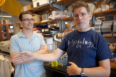 Professor Andrew Murray (right) and postdoctoral fellow John Koschwanez studied yeast to gain insights on the development of multicellular life.