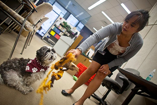 """Harvard can be a very fast-paced and stressful environment,"" said Loise Francisco, a senior research fellow at Harvard Medical School and the owner of Cooper, a 4-year-old Shih Tzu and registered therapy dog who can be checked out from the Countway Library of Medicine."