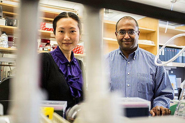"""Using skin cells of patients with cystic fibrosis, Jayaraj Rajagopal (right) and colleagues have created induced pluripotent stem (iPS) cells. """"We're not talking about a cure for CF; we're talking about a drug that hits the major problem in the disease. This is the enabling technology that will allow that to happen in a matter of years,"""" said Rajagopal, the senior author on the paper. Postdoctoral fellow Hongmei Mou (left) is first author on the paper. The work is featured on the cover of this week's journal Cell Stem Cell."""
