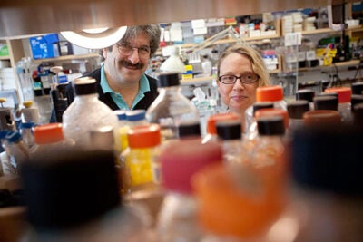 Justine Melo (right), a research fellow, and Gary Ruvkun, professor of genetics at Harvard Medical School, have discovered a new way that animals detect pathogens, by monitoring the disruption of cellular pathways.