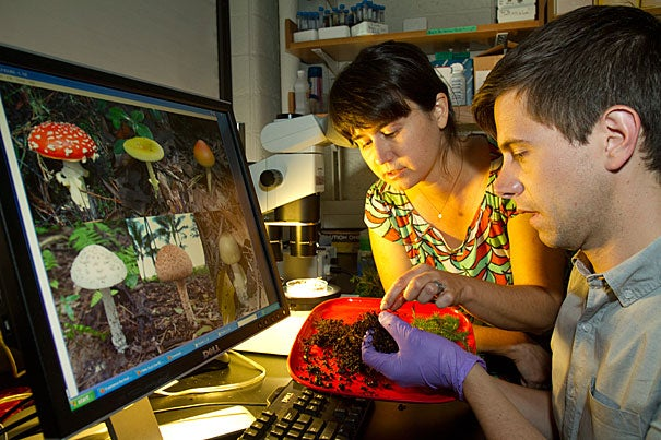 """After extracting DNA from the mushroom samples, Ben Wolfe (right), a postdoctoral fellow at the Faculty of Arts and Sciences Center for Systems Biology, used the codes of four different genes to determine how the various species are related. Mushrooms switched from being decomposers to being symbiotic with trees only once in their evolutionary history. After switching to this new symbiotic lifestyle, they didn't go back to their free-living past. """"I think the really interesting thing is this idea that once you become symbiotic, some of your machinery is lost,"""" added Associate Professor of Organismic and Evolutionary Biology Anne Pringle (left), who worked with Wolfe."""