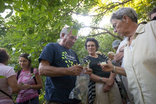 """Peter Del Tredici (center), the Arnold Arboretum's senior research scientist, discusses the Stewartia collection, which dates from 1918. """"You can come here and see these plants, but you don't know anything about them. You could hold your cell phone up [to the bar codes on the signs posted by many plants]. But it's better to have someone tell you,"""" said Del Tredici."""
