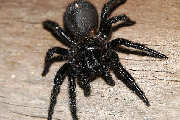 """Sixty-six young women took part in the study of arachnophobia and sleep, which focused on sleep's role in reducing fear of spiders. The goal was to see how """"fear extinction"""" is affected by sleep, wakefulness, and time of day. Fear extinction is an active process of building a new emotional memory; in this case, a memory of spiders not associated with danger or harm."""