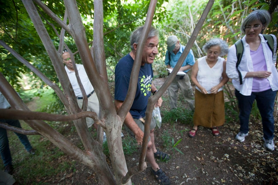 """Peter Del Tredici, a senior research scientist and lecturer in landscape architecture, leads a """"tree mob"""" in exploring different varieties of Stewartia at the Arnold Arboretum.  Kris Snibbe/Harvard Staff Photographer"""