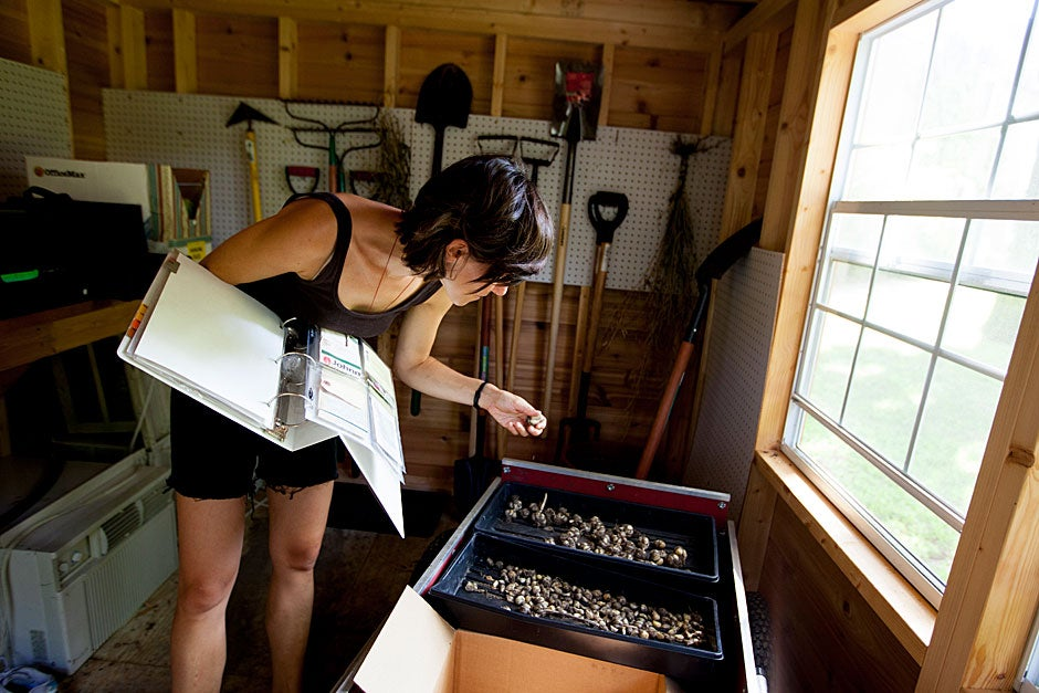 In the shed, Lily Oster keeps seed records.
