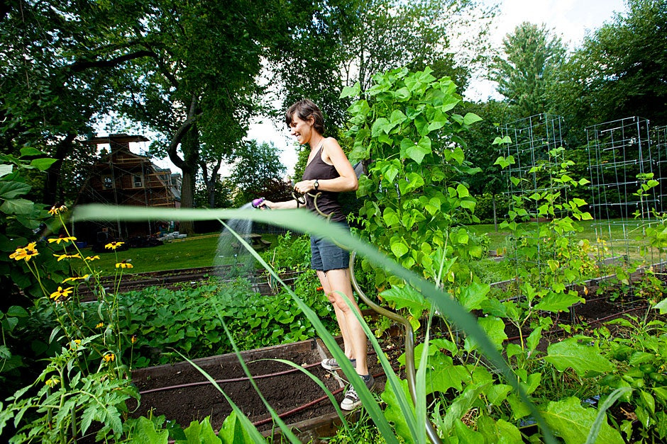 Lily Oster, Harvard Divinity School student, carefully straddles the boards of a raised bed to give the garden a cool drink of water.