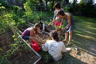 Lily Oster, (on right, pointing) is a third-year Harvard Divinity School student who has been caring for the School's garden as her summer internship. Here, she is teaching first-year students where to plant lettuce. Photo by Rose Lincoln/Harvard Staff Photographer