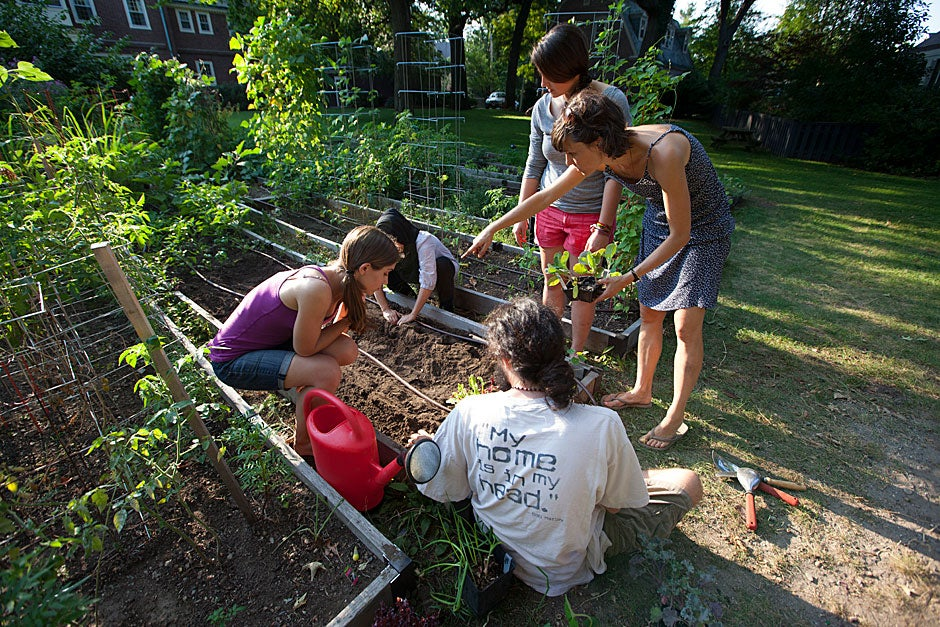 Lily Oster found other Divinity School garden helpers through email and by word of mouth.