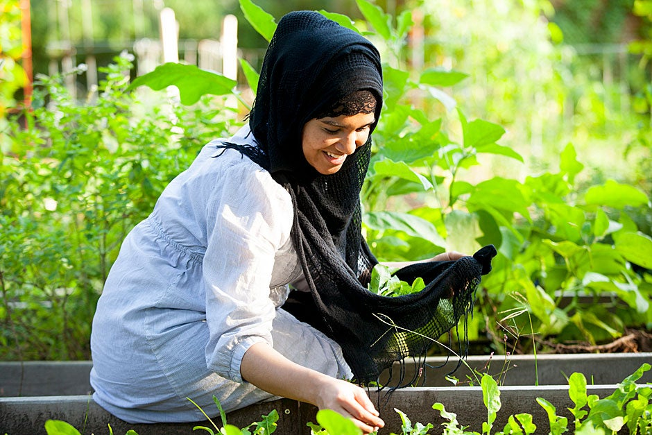 First-year Harvard Divinity School student Mitul Daiyan collects arugula in her shawl.