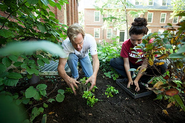 """""""We had areas of the Yard that we just felt could look a little better, and we wanted students to have a chance to feel involved with their environment,"""" said Dean of Freshmen Tom Dingman (left). Dingman was joined by Rosalie Nathans '16 in the beautification efforts."""