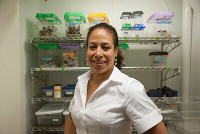 """Associate Professor of Organismic and Evolutionary Biology Cassandra Extavour heads up the Evo-Devo-Eco Network (EDEN), a collaborative group of researchers devoted to encouraging the study of nontraditional """"model"""" organisms."""