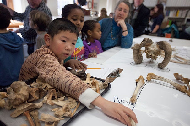 Cosmo Cao (from left), Feven Solomon, and Avyana Quarles, all third-graders from Cambridge's Haggerty School, work with Peabody Museum volunteer Sandy Nayak during a visit to the Peabody Museum's Zooarchaeology Lab.