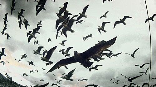 Levianthan_Birds6_500