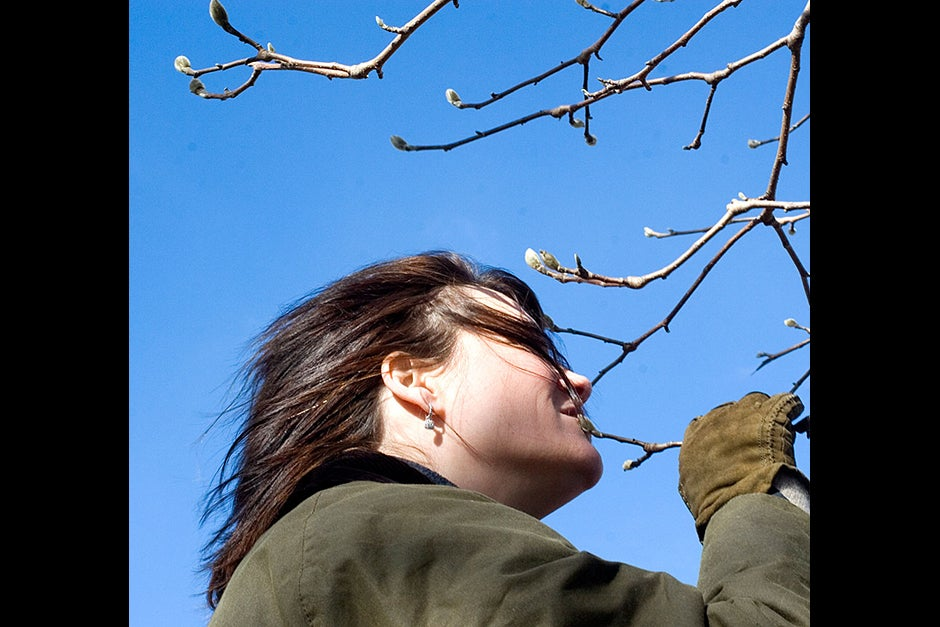 """Under a clear sky, in a class titled """"Winter Tree Observations,"""" Christina Curtis feels the soft bud of a pussy willow tree against her cheek. Rose Lincoln/Harvard Staff Photographer"""